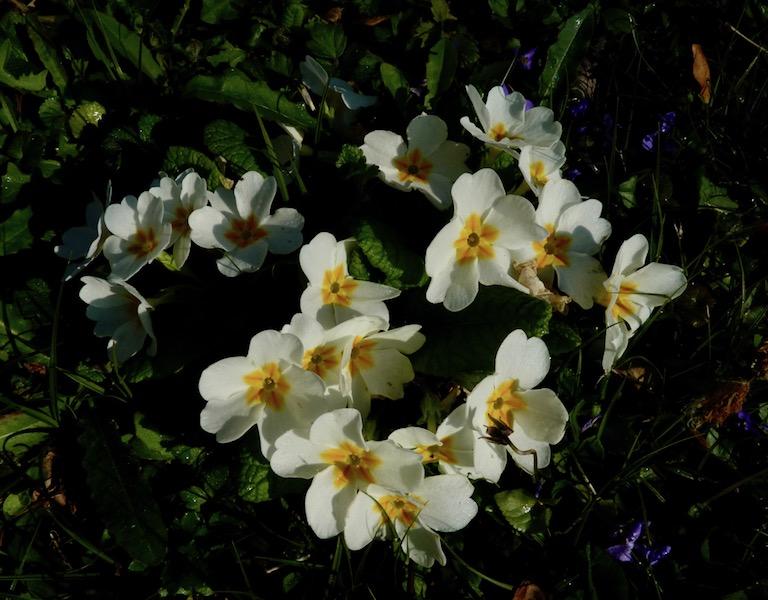 cycle des fleurs