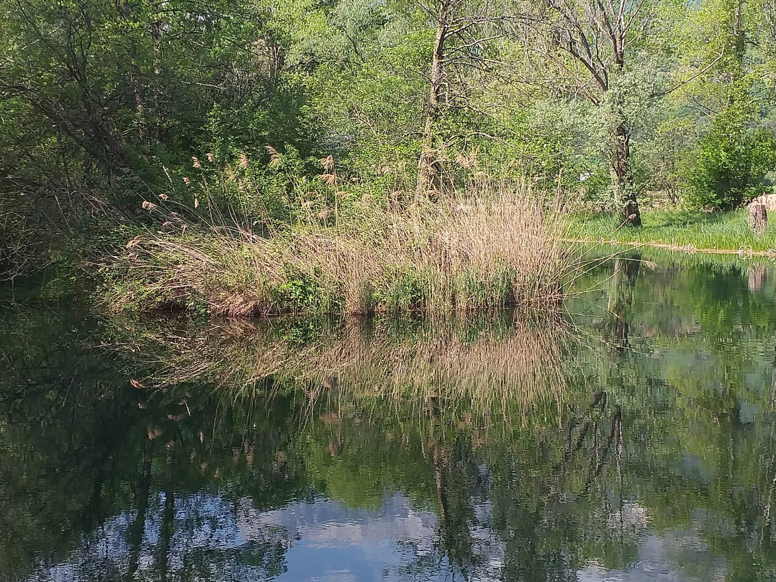 le petit étang de Bauches